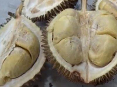 Durian Parapat